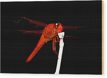 Wood Print featuring the photograph Fire Red Dragon by Peggy Franz