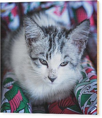 Firecracker Kitten Wood Print by Zoe Ferrie