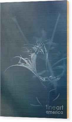 Fireweed Blues Wood Print by Liz  Alderdice