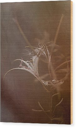 Wood Print featuring the photograph Fireweed by Liz  Alderdice