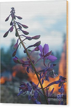 Fireweed Number Five Wood Print by Brian Boyle