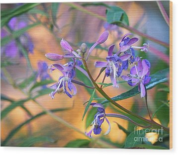 Fireweed Number Three Wood Print by Brian Boyle