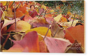 Wood Print featuring the photograph First Day Of Fall by Andrea Anderegg