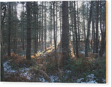 Wood Print featuring the photograph First Fall Of Snow On Cannock Chase by Jean Walker