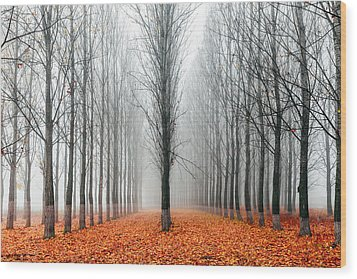 First In The Line Wood Print by Evgeni Dinev