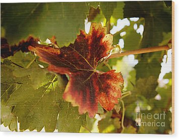 First Signs Of Autumn Wood Print by Dry Leaf