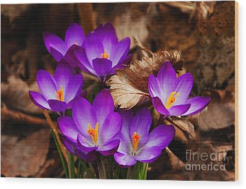 First Signs Of Spring Wood Print by Elaine Manley