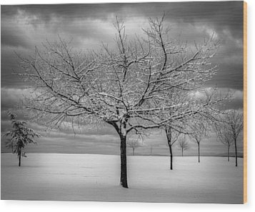 First Snow Wood Print by Randy Hall