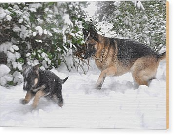 Wood Print featuring the photograph First Snow by Tanya  Searcy