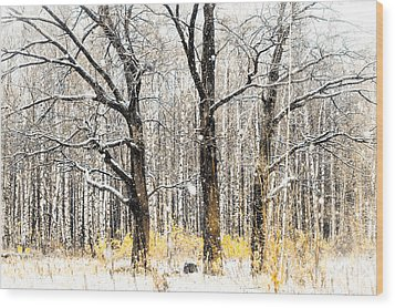 First Snow. Tree Brothers Wood Print by Jenny Rainbow