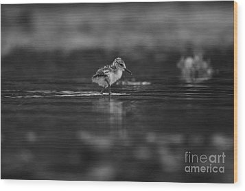 Wood Print featuring the photograph   First Steps by John F Tsumas