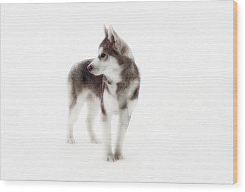 First Winter Wood Print by Iconic Images Art Gallery David Pucciarelli