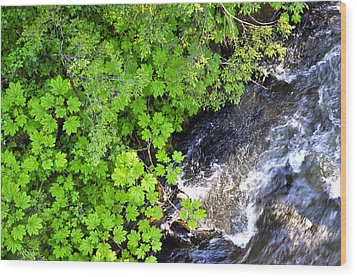 Fish Creek In Summer Wood Print by Cathy Mahnke
