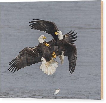 Fish Fight  Wood Print by Glenn Lawrence