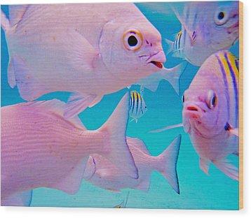 Fish Frenzy Wood Print by Carey Chen