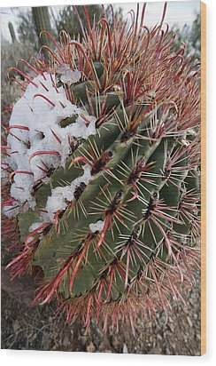 Fish Hook Barrel Cactus With Snow Wood Print by Susan  Degginger