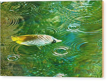 Fish In The Rain Wood Print