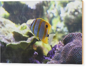 Fish - National Aquarium In Baltimore Md - 1212111 Wood Print by DC Photographer