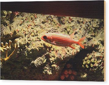 Fish - National Aquarium In Baltimore Md - 1212118 Wood Print by DC Photographer