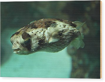 Fish - National Aquarium In Baltimore Md - 1212136 Wood Print by DC Photographer