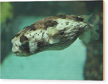 Fish - National Aquarium In Baltimore Md - 1212137 Wood Print by DC Photographer