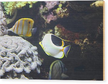 Fish - National Aquarium In Baltimore Md - 121239 Wood Print by DC Photographer