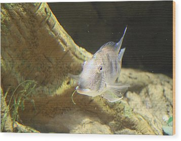 Fish - National Aquarium In Baltimore Md - 121248 Wood Print by DC Photographer