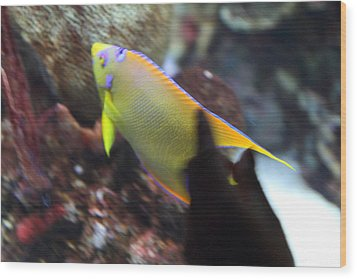 Fish - National Aquarium In Baltimore Md - 121272 Wood Print by DC Photographer