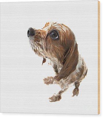 Fisheye Wet Archie Wood Print by Jane Rix