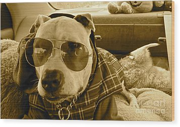 Fix My Sunglasses.... Wood Print by Q's House of Art ArtandFinePhotography