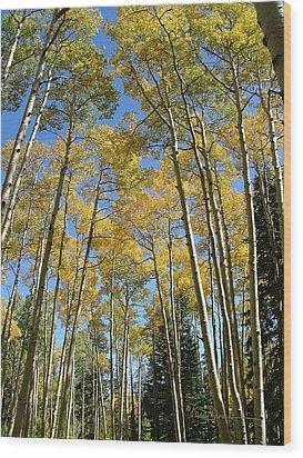 Flagstaff Aspens 794 Wood Print