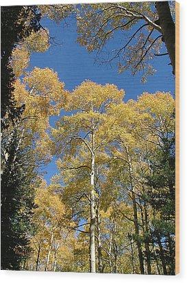 Flagstaff Aspens 803 Wood Print