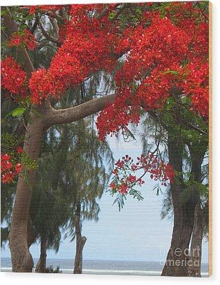 Flamboyant - Ile De La Reunion - Reunion Island Wood Print by Francoise Leandre