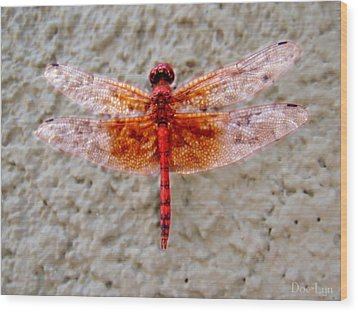 Flame Dragonfly  Wood Print