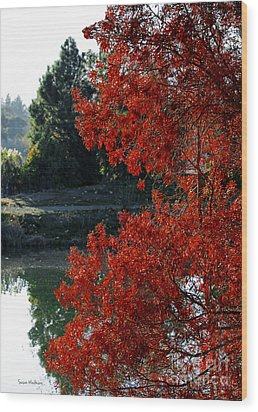 Flame Red Tree Wood Print by Susan Wiedmann
