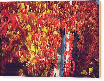 Wood Print featuring the photograph Flaming Autumn Leaves by Art Photography
