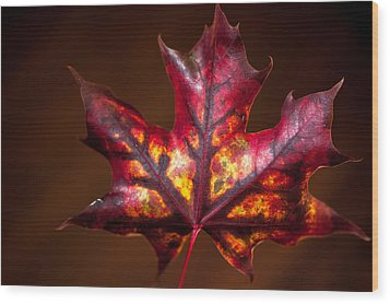 Flaming Red  Wood Print by Crystal Hoeveler
