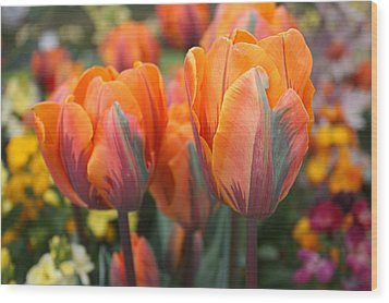 Flaming Tulips Wood Print