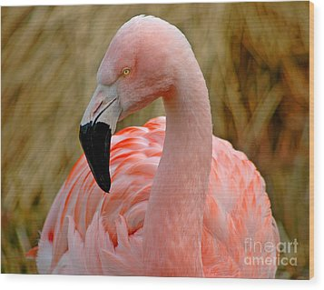 Wood Print featuring the photograph Flamingo Art by Nick  Boren