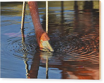 Flamingo Close Up Wood Print by Dave Dilli