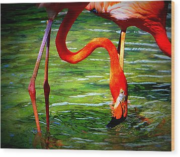 Wood Print featuring the photograph Flamingo by David Mckinney