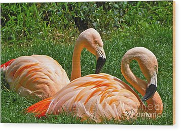 Flamingo Duo Wood Print by Eve Spring
