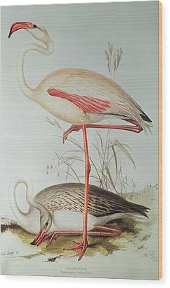 Flamingo Wood Print by Edward Lear