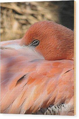 Wood Print featuring the photograph Flamingo by Eva Kaufman