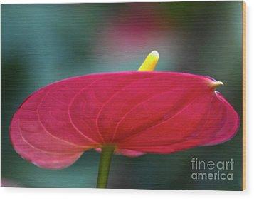 Flamingo Flower 1 Wood Print by Heiko Koehrer-Wagner
