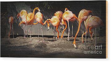 Flamingo Hangout Wood Print by Sara  Raber