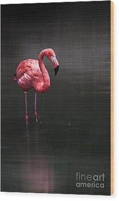 Flamingo  Wood Print by Hannes Cmarits