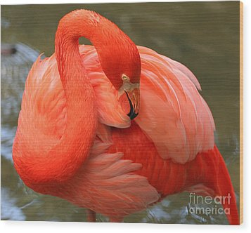 Flamingo Wood Print by Larry Nieland