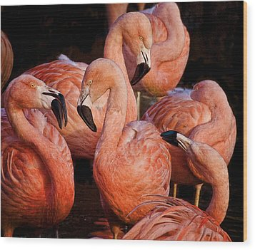 Wood Print featuring the photograph Flamingo Lingo by Brian Tarr