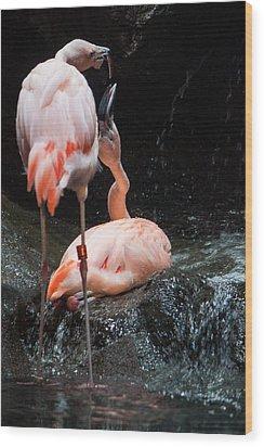 Flamingo Love Wood Print by Mike Lee